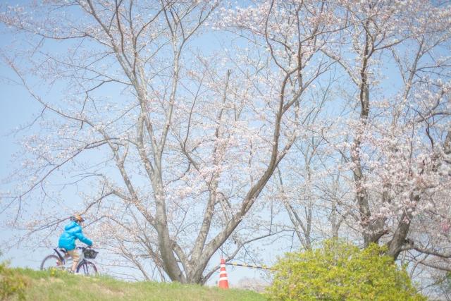 桜とじてんしゃ