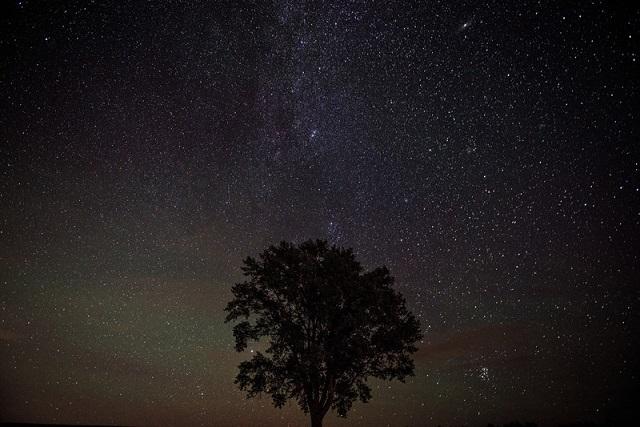 一本の木と夜空