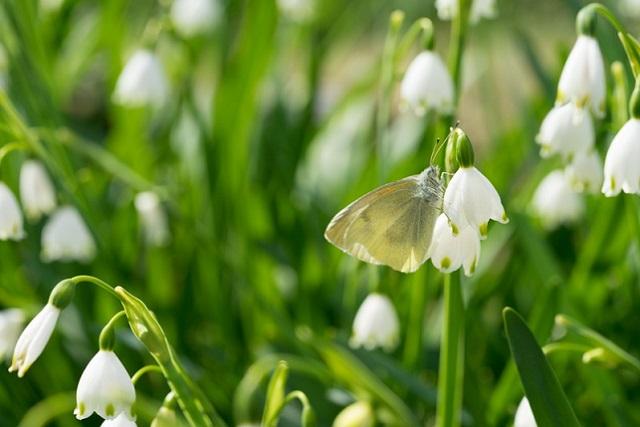 キレイな蝶々
