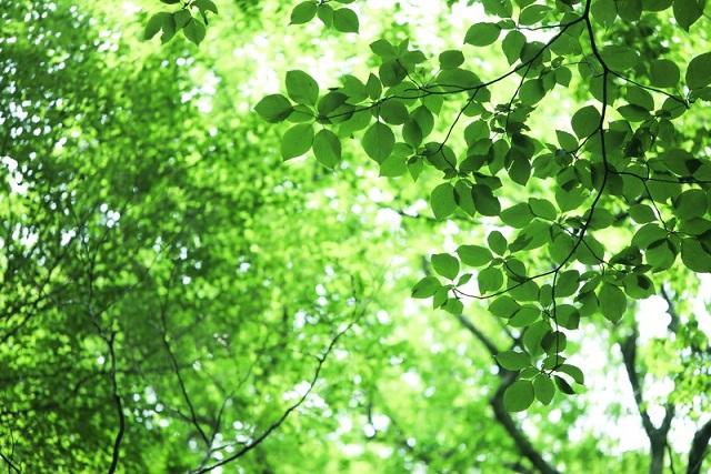 キレイな葉っぱ