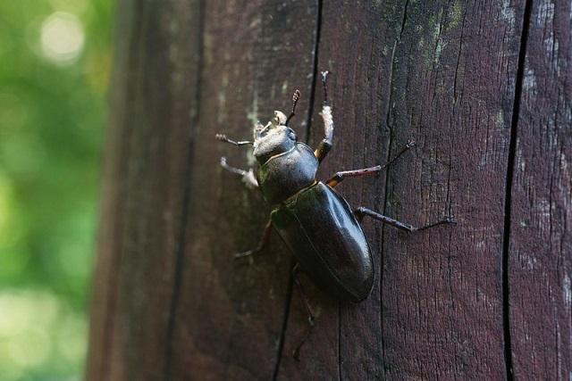 艶やかな昆虫