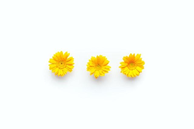 黄色い3輪のお花
